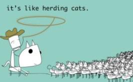 herding-cats-2-300x185